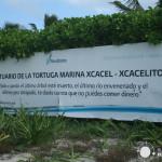 Playa de Xcacel y el Cenote escondido de Xcacelito