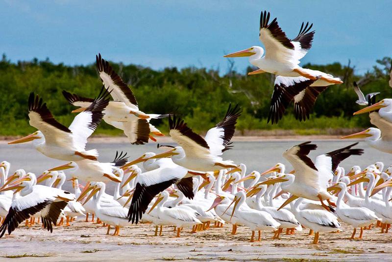 Isla Contoy es el lugar más importante de nidificación de aves marinas en todo el Caribe mexicano
