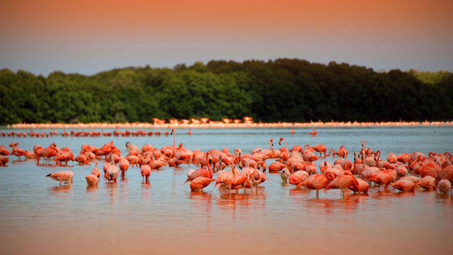 Flamencos rosas en la Reserva de Ría Lagartos