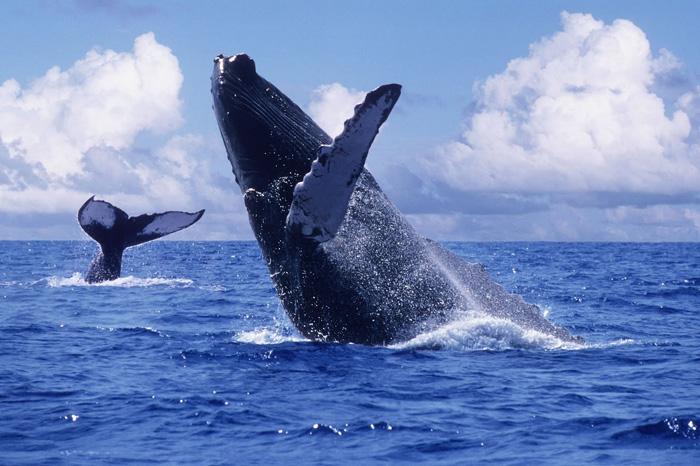 Avistamiento de ballenas en Ensenada