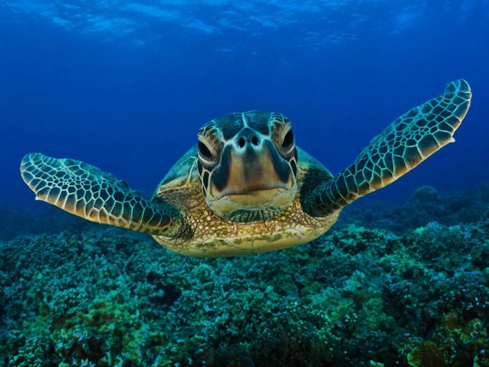 Tortugas en las playas de la Riviera Maya