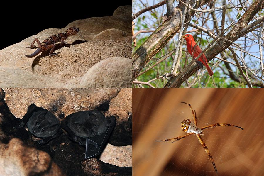 Fauna en la Reserva de Río Secreto