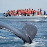 Tour de Avistamiento de Ballenas en Los Cabos
