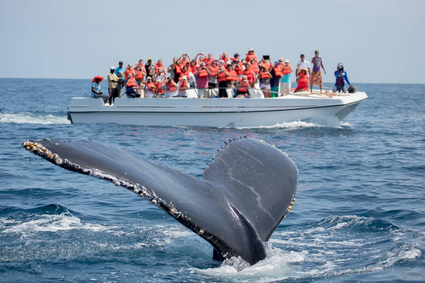 Excursión para ver las ballenas grises en Los Cabos de Baja California
