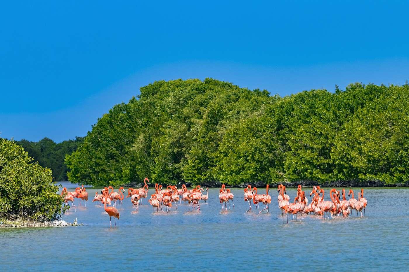 Flamencos en la Reserva de la Biosfera de Celestún