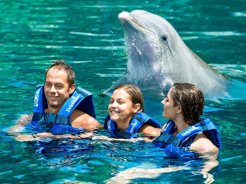 Actividad de delfines en el Parque Xel-Há