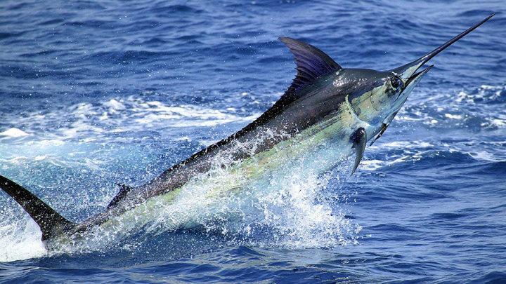 Pesca deportiva en los Cabos